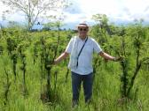 Inspecting leucaena field for dairy cows in Colombia
