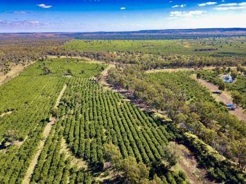 Aerial view of leucaena in Central Queensland, Australia